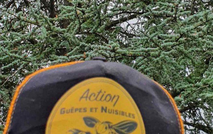 destruction nid frelons asiatiques milly la foret 77